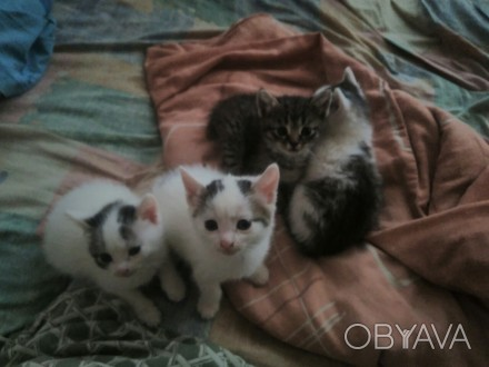 Котики Безкоштовно
