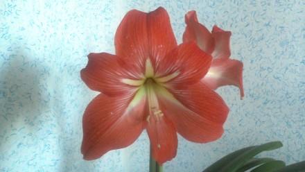 Продам комнатный цветок. Харьков. фото 1