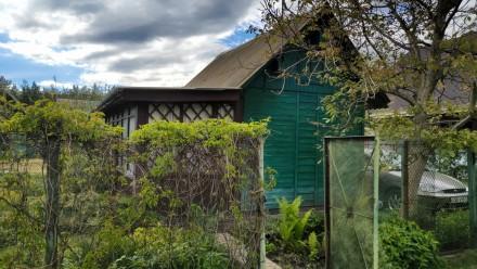 Продам участок с небольшим домиком для хорошего летнего/осеннего времяпрепровожд. Хотяновка, Киевская область. фото 5