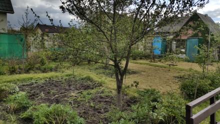Продам участок с небольшим домиком для хорошего летнего/осеннего времяпрепровожд. Хотяновка, Киевская область. фото 4