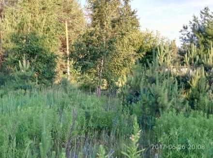 Продам  земельный участок 5-сот под садоводство с.Берёзовка,Сухой ,ровный,свет р. Березовка, Житомирская область. фото 4