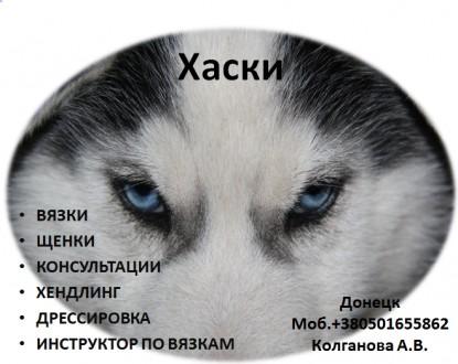 Предлагаю услуги хендлера, профессиональный показ собаки на выставках. Имею опыт. Луганськ, Луганська область. фото 5