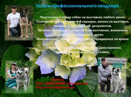 Хендлер/Хендлинг показ собаки на выставке.. Луганськ. фото 1