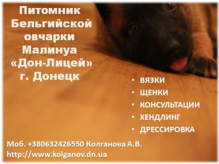 Предлагаю услуги хендлера, профессиональный показ собаки на выставках. Имею опыт. Луганськ, Луганська область. фото 7