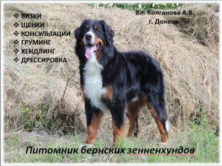 Владельцам жесткошерстных пород собак, предлагаем услуги по триммингу их питомце. Луганськ, Луганська область. фото 9