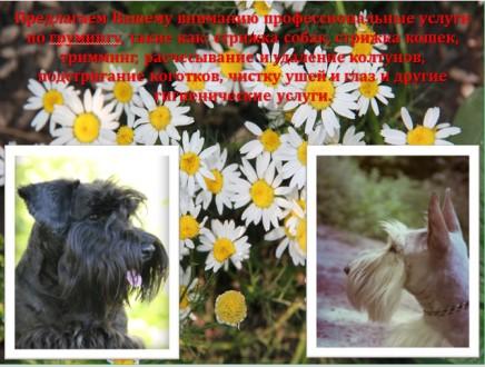 Владельцам жесткошерстных пород собак, предлагаем услуги по триммингу их питомце. Луганськ, Луганська область. фото 4