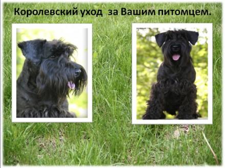 Владельцам жесткошерстных пород собак, предлагаем услуги по триммингу их питомце. Луганськ, Луганська область. фото 3