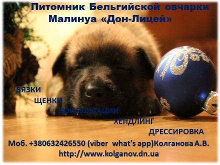 Владельцам жесткошерстных пород собак, предлагаем услуги по триммингу их питомце. Луганськ, Луганська область. фото 10