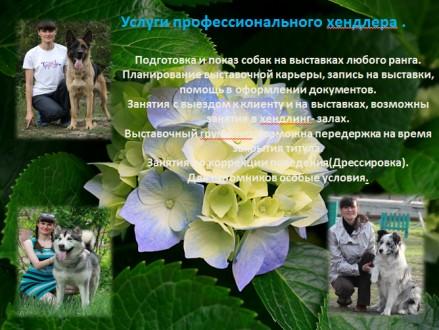 Владельцам жесткошерстных пород собак, предлагаем услуги по триммингу их питомце. Луганськ, Луганська область. фото 5