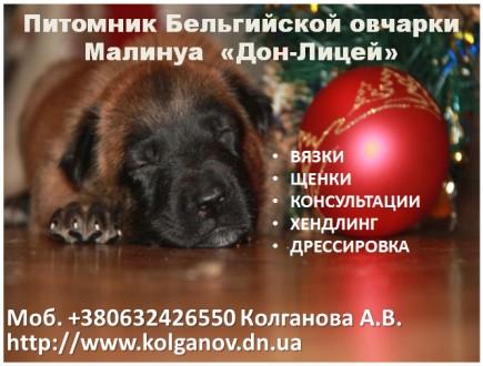 Владельцам жесткошерстных пород собак, предлагаем услуги по триммингу их питомце. Луганськ, Луганська область. фото 11