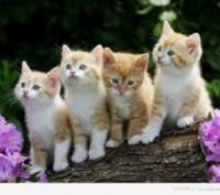 Котенята. Чернигов. фото 1