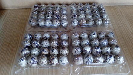 Продам  свежие и вкусные перепелинное яйцо. Славянск. фото 1