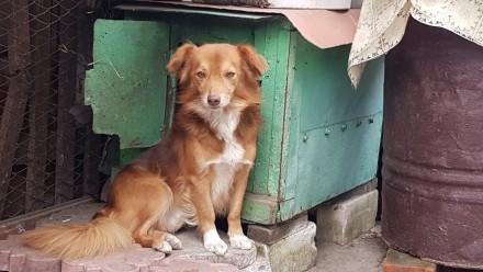 Собачка добрая с характером пригучая. Херсон. фото 1