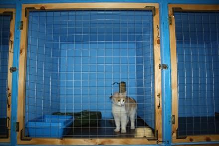 Передержка для котов. Одесса. фото 1