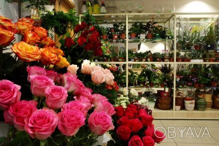 Оптовые склады цветов одесса, 7 цветов магазины