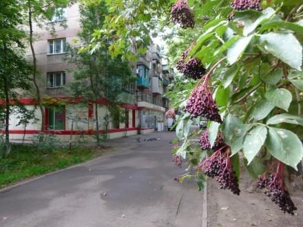 Предлагаем купить 2-х комнатную квартиру по улице Сегедская. Квартира требует ре. Малий Фонтан, Одеса, Одеська область. фото 5