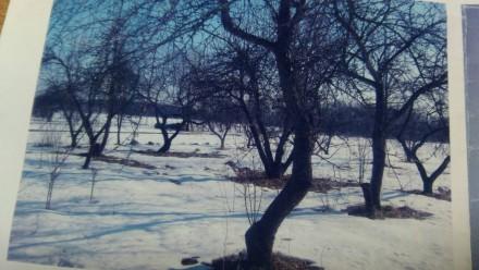 Продається 4-х кім.теплий будинок в с.Головки Житомирської області.18 км від Мал. Головки, Житомирська область. фото 3