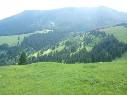 дуже красиве місце на висоті 1200м над рівнем моря .Кривопільський перевал, 1.5 . Кривопілля, Івано-Франківська область. фото 4