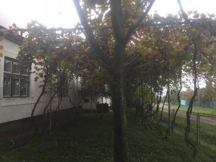 Терміново продається житловий будинок з надвірними спорудами, що розташований в . Ільниця, Закарпатська область. фото 8