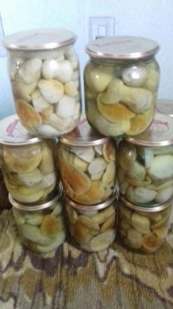 Консервированные белые грибы. Чернигов. фото 1