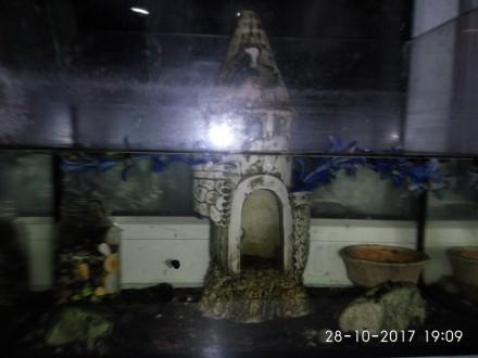Аквариум. Павлоград. фото 1