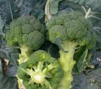 Семена (насіння) Капуста брокколі.. Киев. фото 1