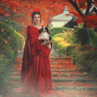 Японский хин (щенки-вязки), КСУ-FCI. Днепр. фото 1