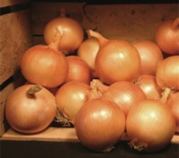 Семена (насіння) Цибуля ріпчаста.. Киев. фото 1