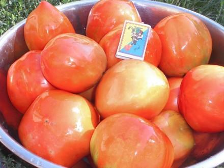 Семена овощей,цветов,арахиса,,фасоли,пряных и лекарственных  sem-tomatov.com.ua. Ставище. фото 1