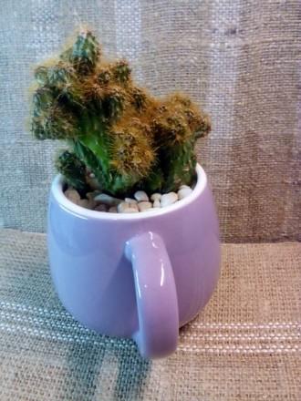 Цветочная композиция: кактус в чашке - оригинальный подарок родным, друзьям, люб. Полтава, Полтавская область. фото 4