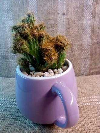 Цветочная композиция: кактус в чашке - оригинальный подарок родным, друзьям, люб. Полтава, Полтавская область. фото 2