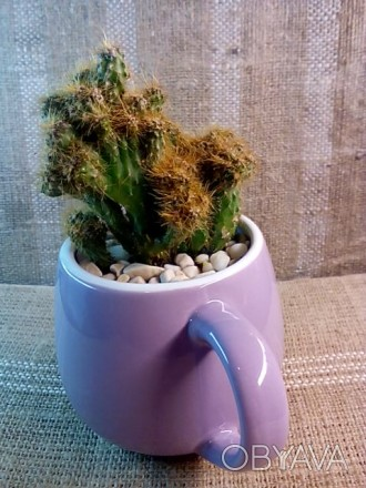 Цветочная композиция: кактус в чашке - оригинальный подарок родным, друзьям, люб. Полтава, Полтавская область. фото 1