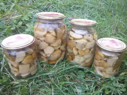 Білі гриби. Белые грибы. Сушені та мариновані.. Верховина. фото 1