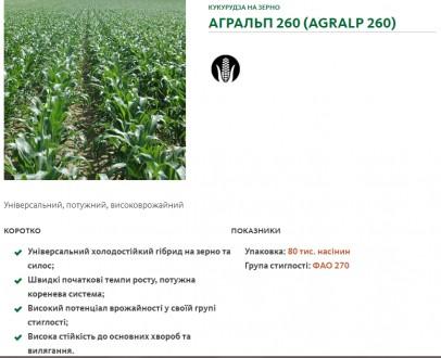 Насіння кукурузи (середньоранній гібрид) по акційній ціні 950 грн/мішок. Киев. фото 1