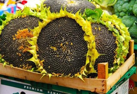 Семена под гранстар НС-2017, Бонд, Дракон, Аурис, Матадор, НС-1752, ПР64Е71, П64. Харьков. фото 1