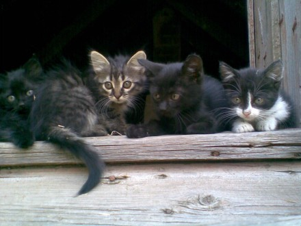 Маленька кішка. Новая Каховка. фото 1