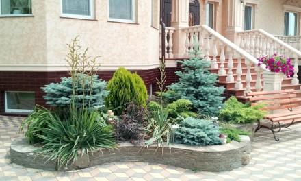 озеленення ландшафтний дизайн. Киев. фото 1