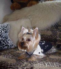Стрижка собак в Днепропетровске. Днепр. фото 1