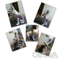 ж/м Левобережный - стрижка собак - мытье, сушка - обработка ушей - подстригание . Днепр, Днепропетровская область. фото 13