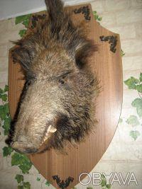 Голова кабана и оленёнка. Чернигов. фото 1