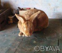Продам кроликов. Новомосковск. фото 1