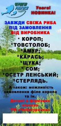 Свежая рыба оптом и в розницу. Чернигов. фото 1