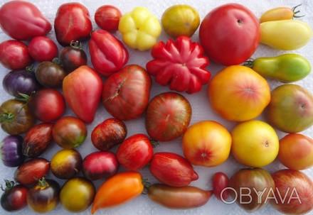 Пропоную насіння томатів, як екзотичних і рідкісних, так і традиційних, поширени. Прилуки, Чернігівська область. фото 1