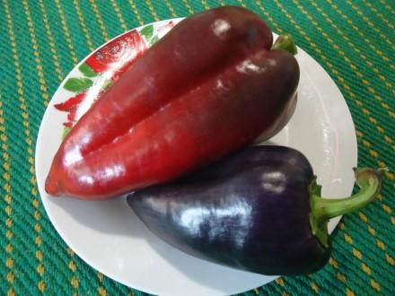 Пропоную насіння солодкого перцю, як екзотичних і рідкісних, так і традиційних, . Прилуки, Черниговская область. фото 5