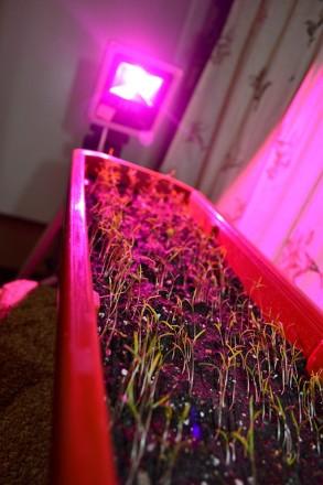 Фито прожектор 10w для растений фитолампа fito. Черновцы. фото 1