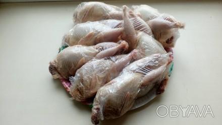 Продам перепелинное мясо за 1кг 180грн.Проживаю в г.Святогорск.. Славянск, Донецкая область. фото 1