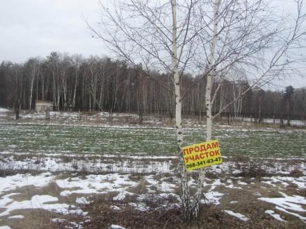 Земельный участок 12 соток продается в селе Кошевка под застройку Вашего дома. Чернигов. фото 1