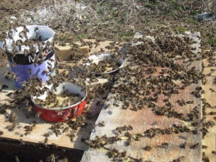 Соевая мука, соєве борошно для подкормки пчел. Черниговка. фото 1