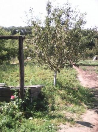 земельный участок. Белая Церковь. фото 1