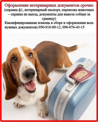 Оформление ветеринарных и разрешительных документов для вашего любимца. Харьков. фото 1
